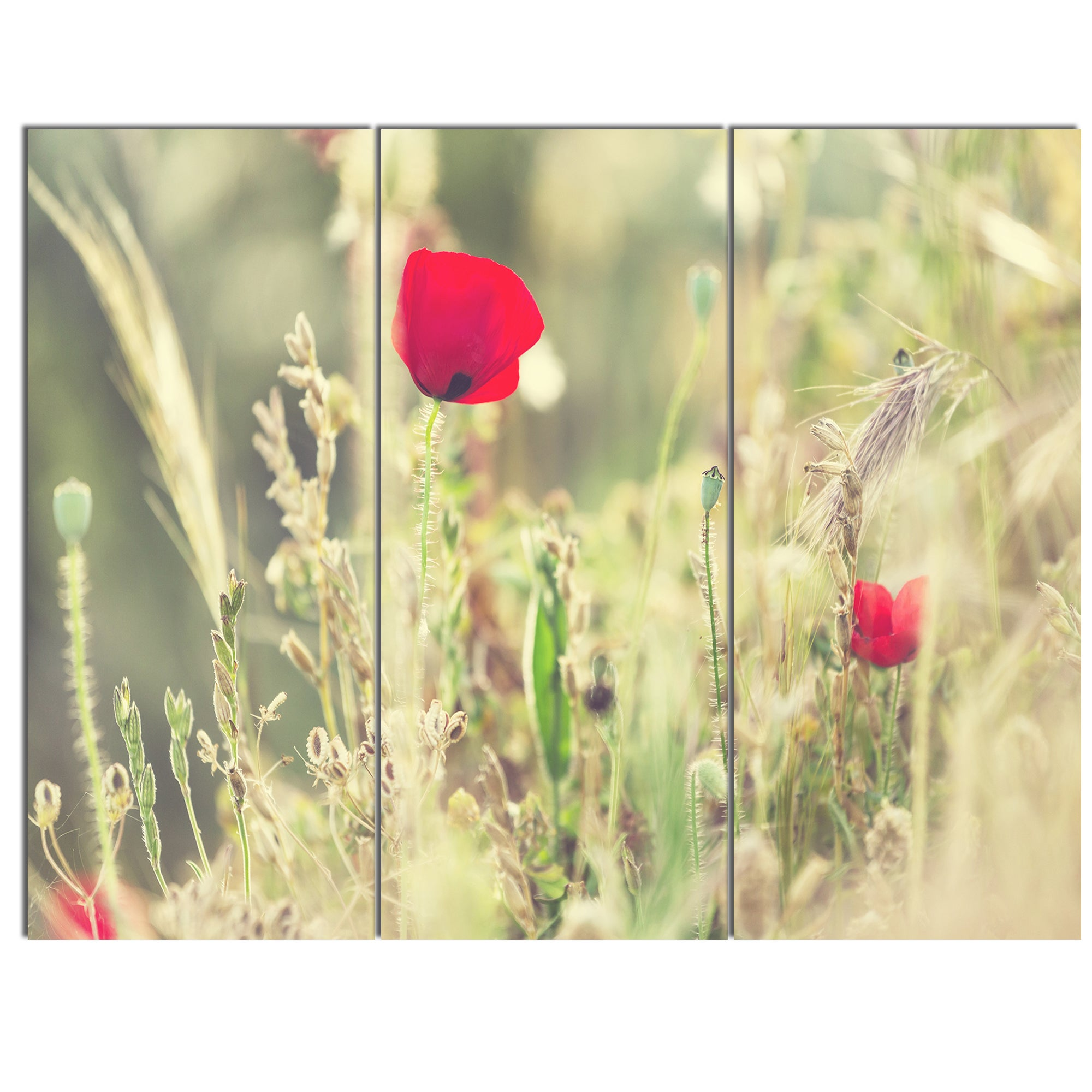 Shop Designart \'Meadow with Wild Poppy Flowers\' Large Flower Metal ...