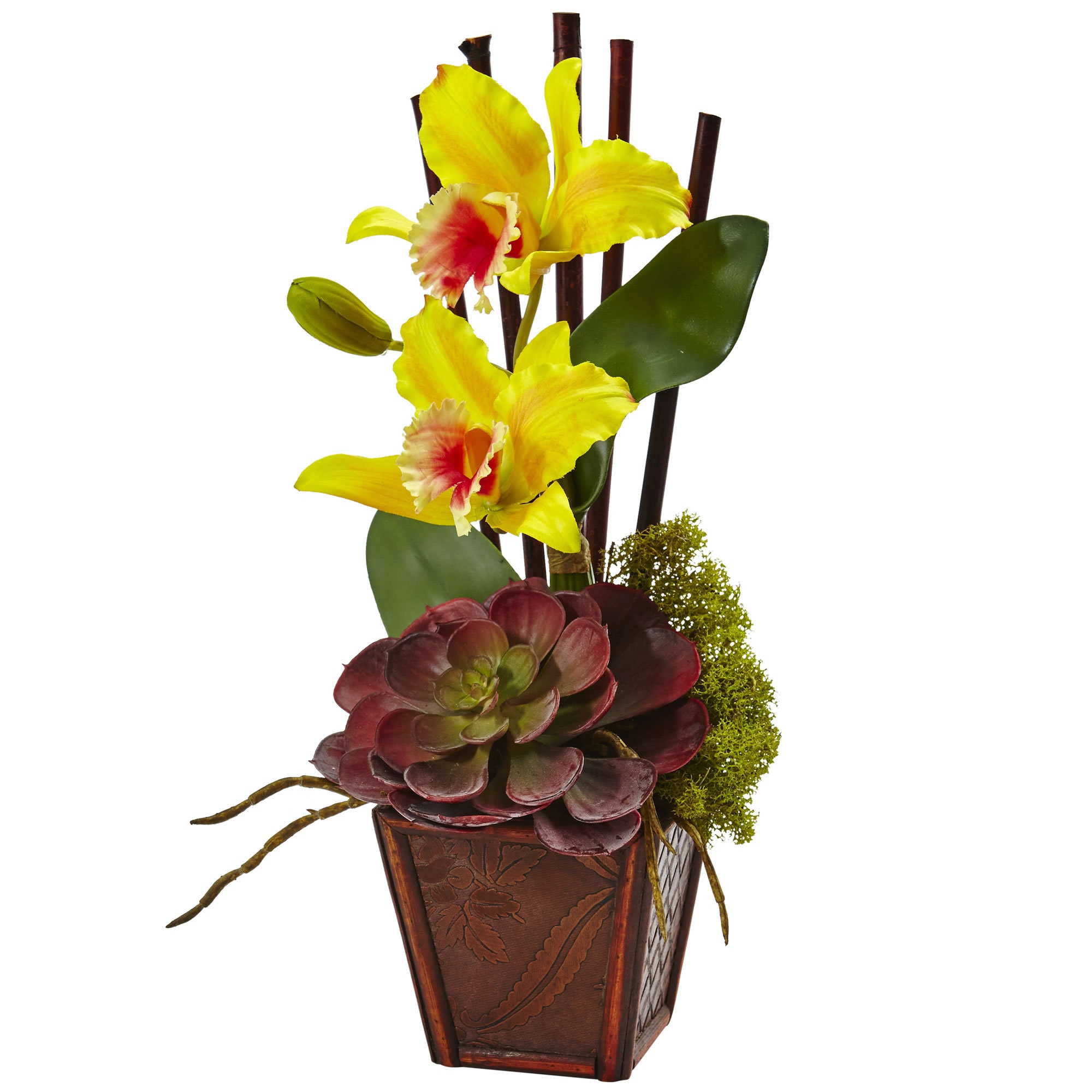 Cattleya Orchid And Succulent Arrangement Set Of 2 Yellow Free