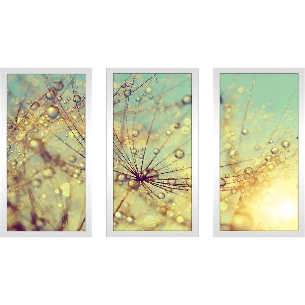 Dewy dandelion flower at sunset close up Full\' Framed Plexiglass ...