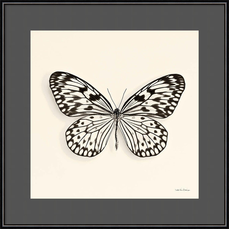 Shop Framed Art Print \'Butterfly V BW Crop\' by Debra Van Swearingen ...