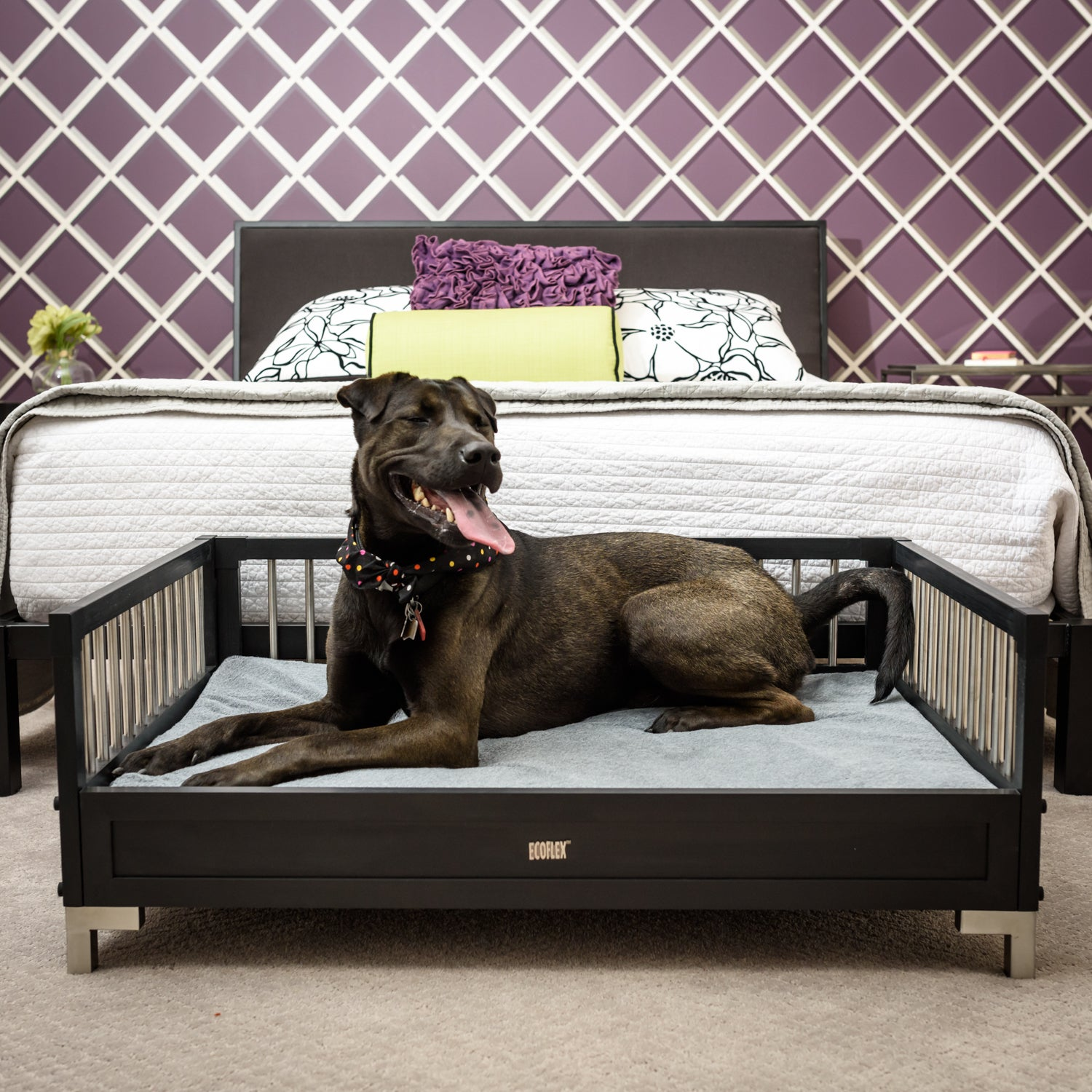 New Age Pet Ecoflex Manhattan Raised Dog Bed With Memory Foam Cushion Free Shipping Today 14585066