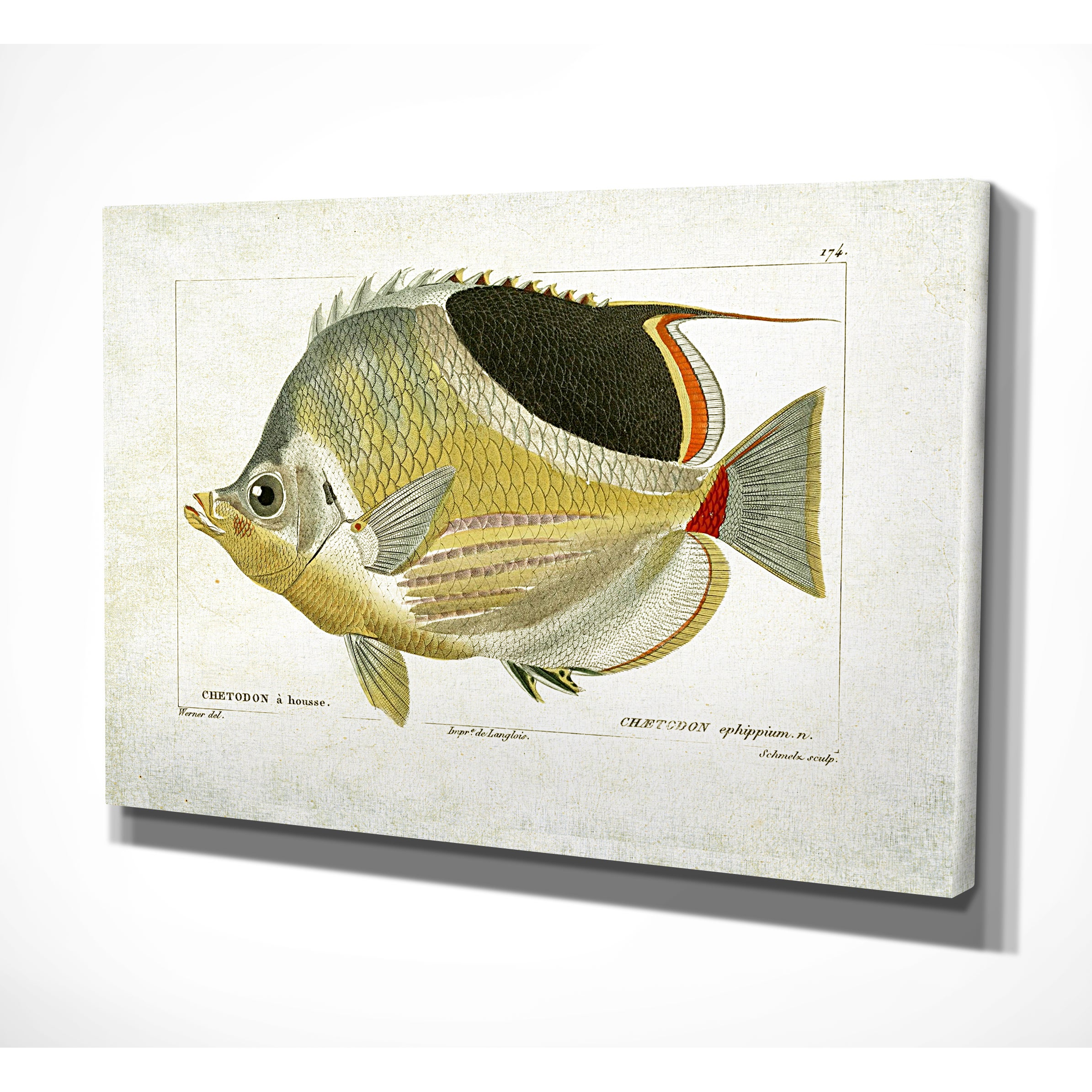 Fish Sketch I Free Shipping Today Overstock 21168529