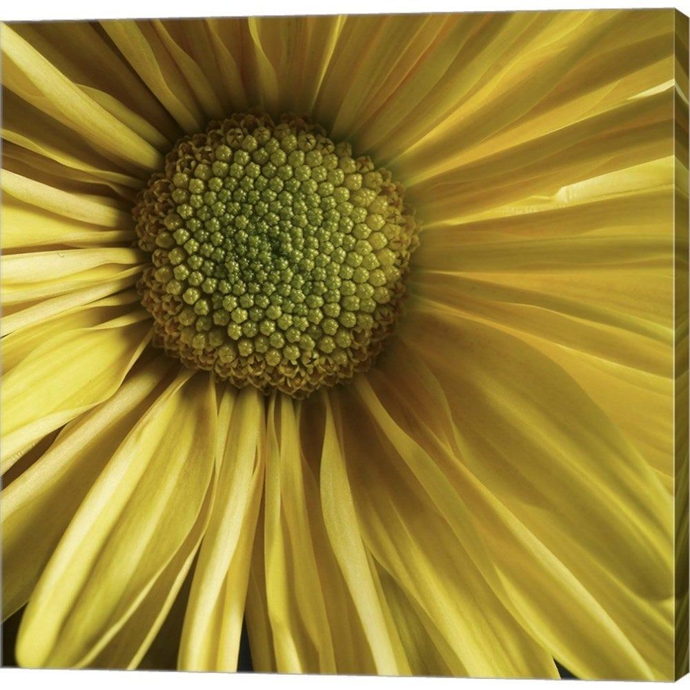 Shop Michael Harrison Yellow Daisy Canvas Art Free Shipping