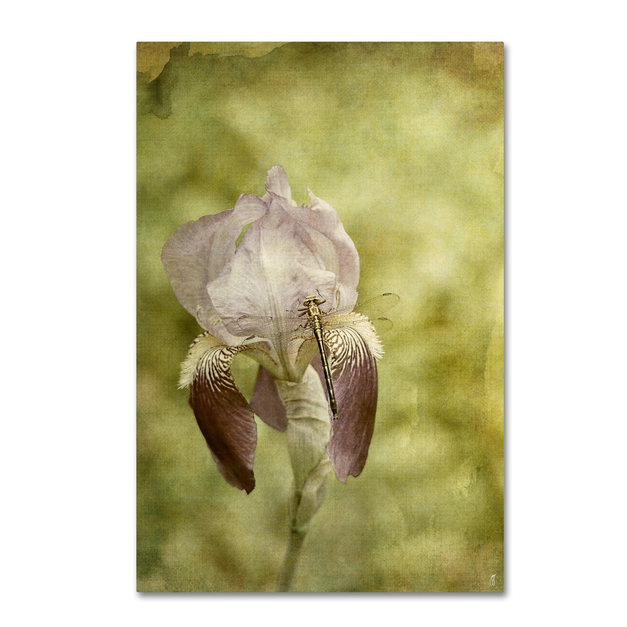 Jai Johnson \'Vintage Iris And Dragonfly\' Canvas Art - Free Shipping ...
