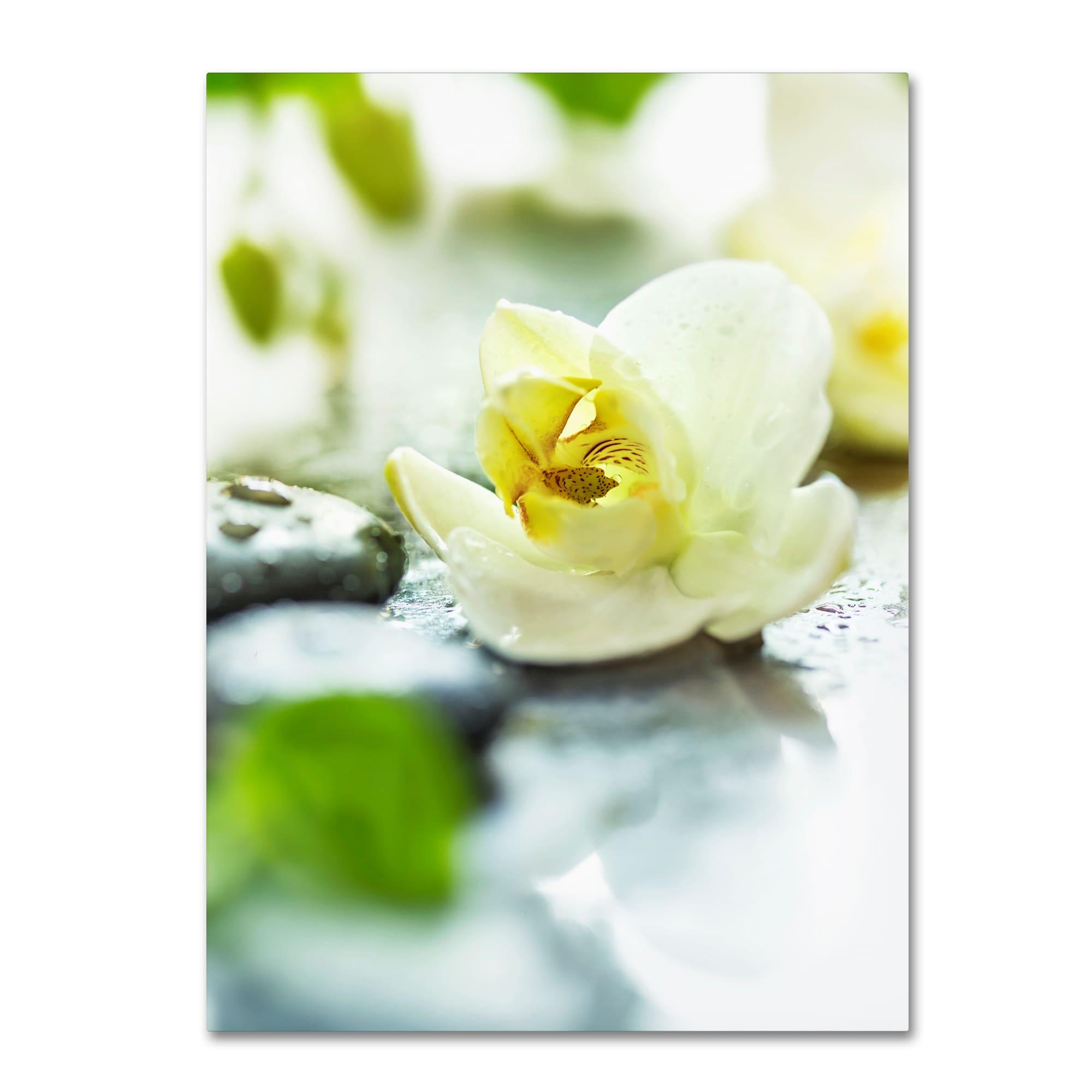 Shop Zen Orchid \'Zen Orchid\' Canvas Art - Free Shipping Today ...