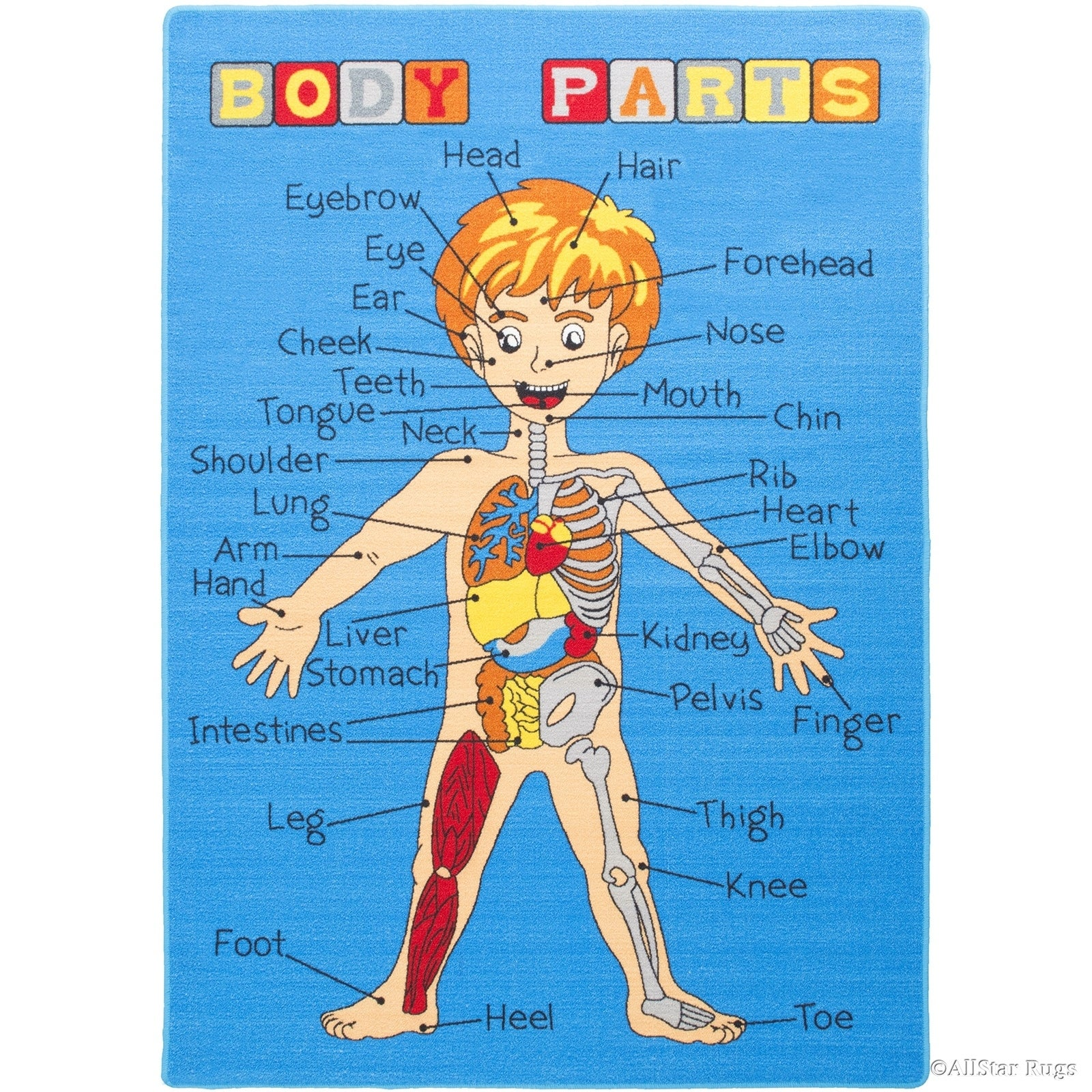 Shop Allstar Kids Human Anatomy Learn All About The Human Rug - 4 ...