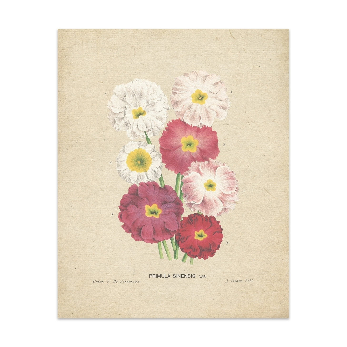 Shop Flower Handmade Paper Print Free Shipping On Orders Over 45