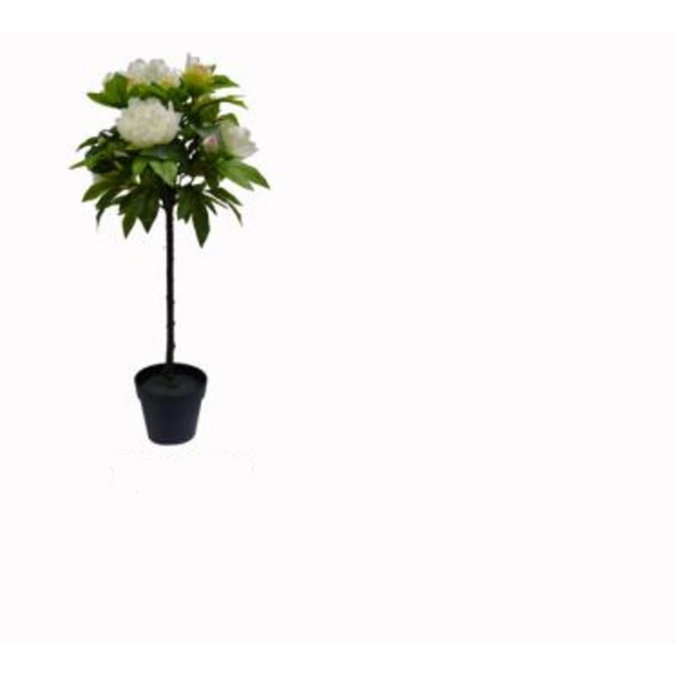 Shop 3025 Potted Ball Shaped Topiary Tree With Large White Flowers