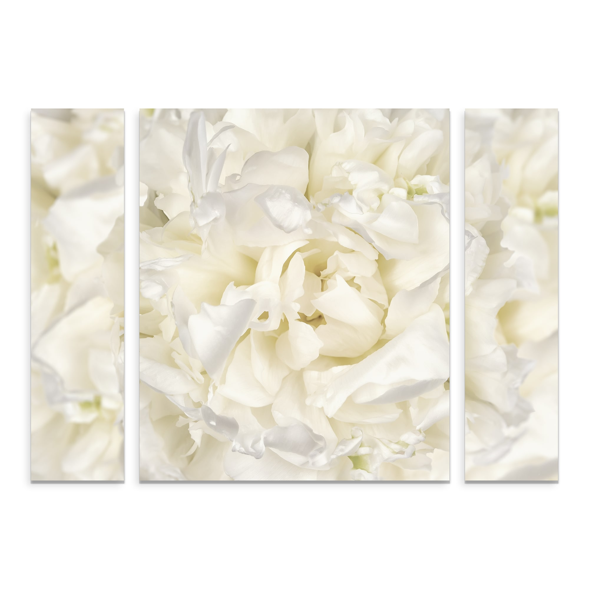 Trademark Fine Art Cora Niele White Peony Flower Large Multi Panel Canvas Art Set