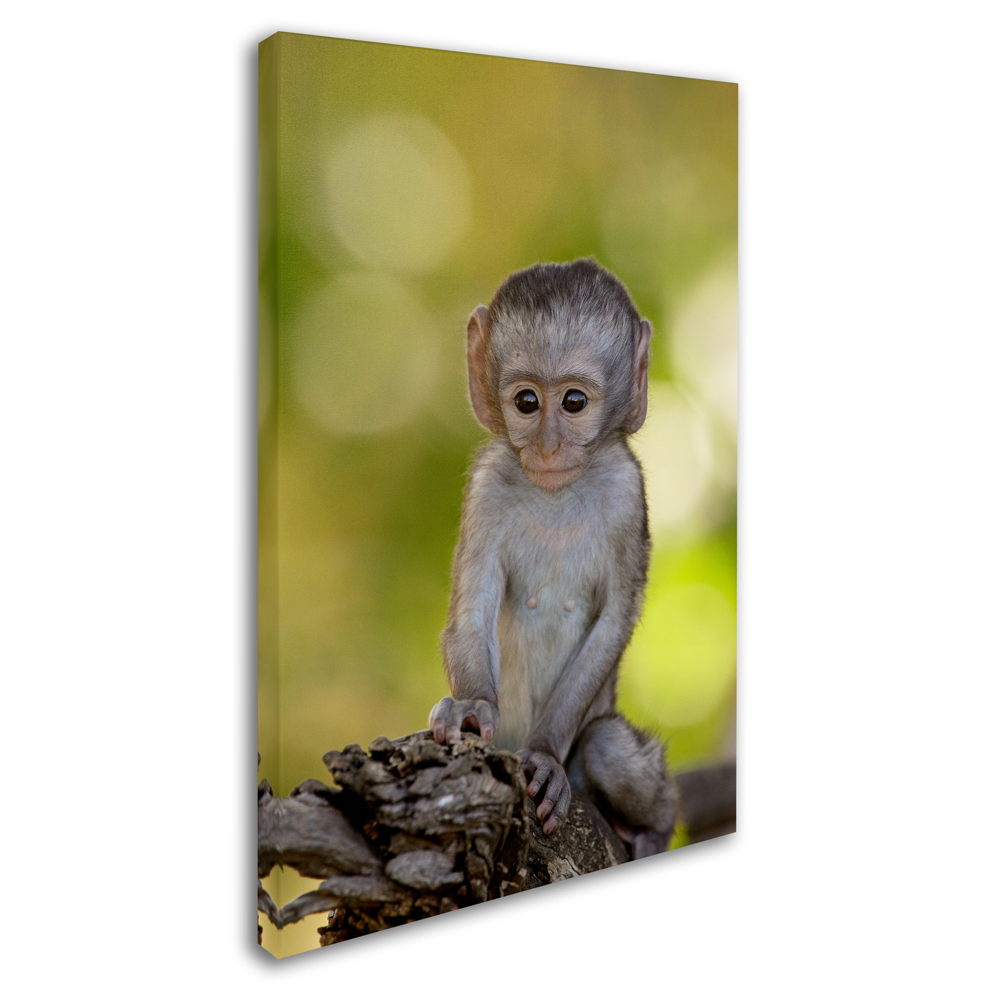Shop Robert Harding Picture Library \'Baby Monkey\' Canvas Art - On ...