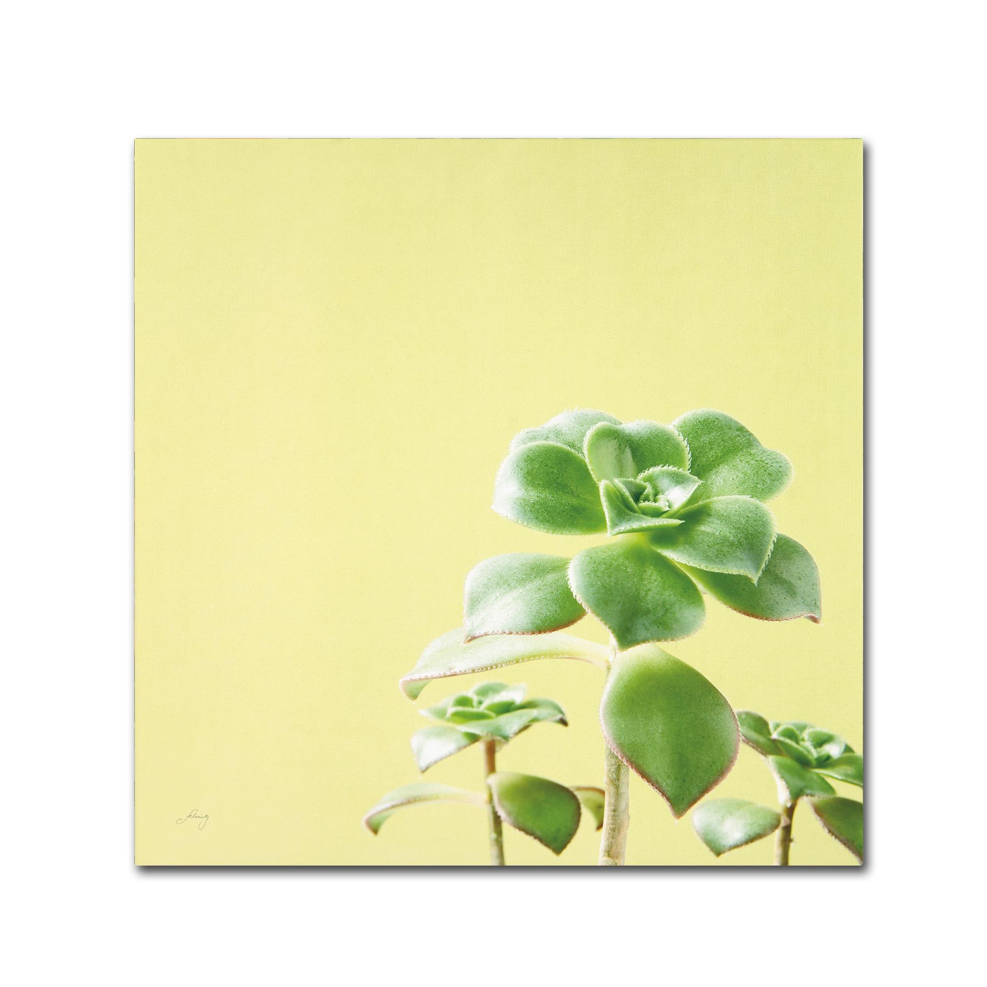 Shop Felicity Bradley \'Succulent Simplicity X\' Canvas Art - On Sale ...