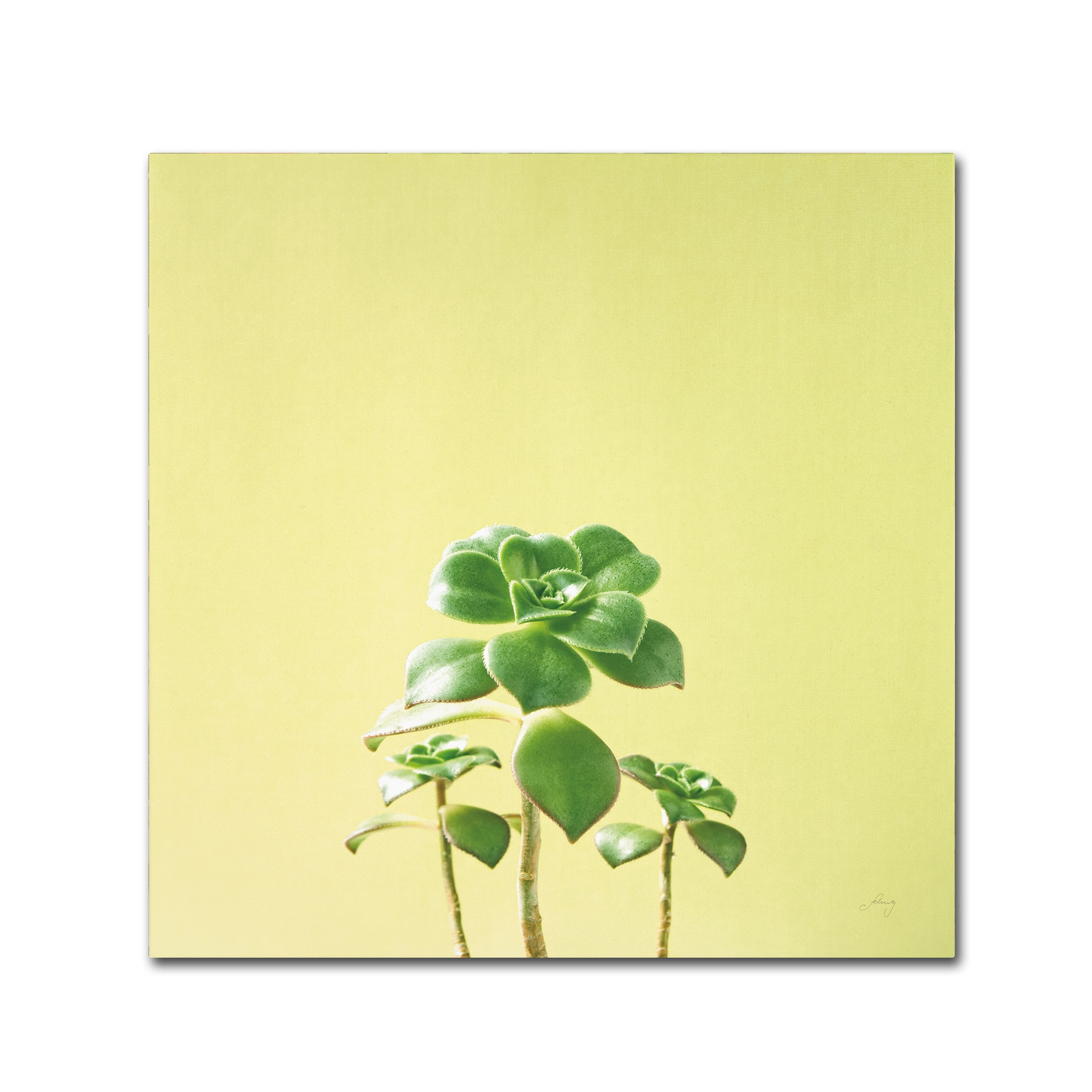 Felicity Bradley \'Succulent Simplicity IX\' Canvas Art - Free ...