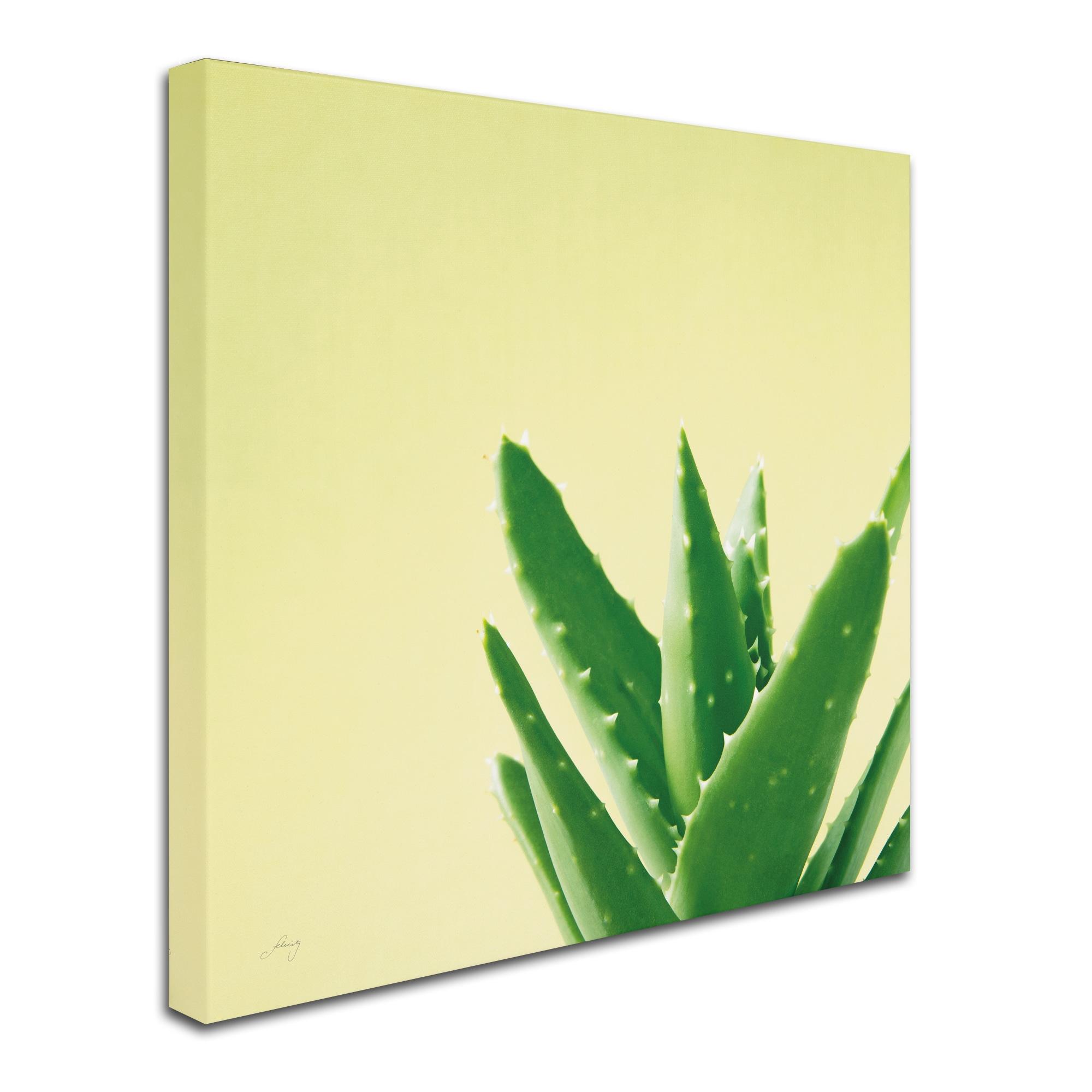 Shop Felicity Bradley \'Succulent Simplicity VI\' Canvas Art - On Sale ...