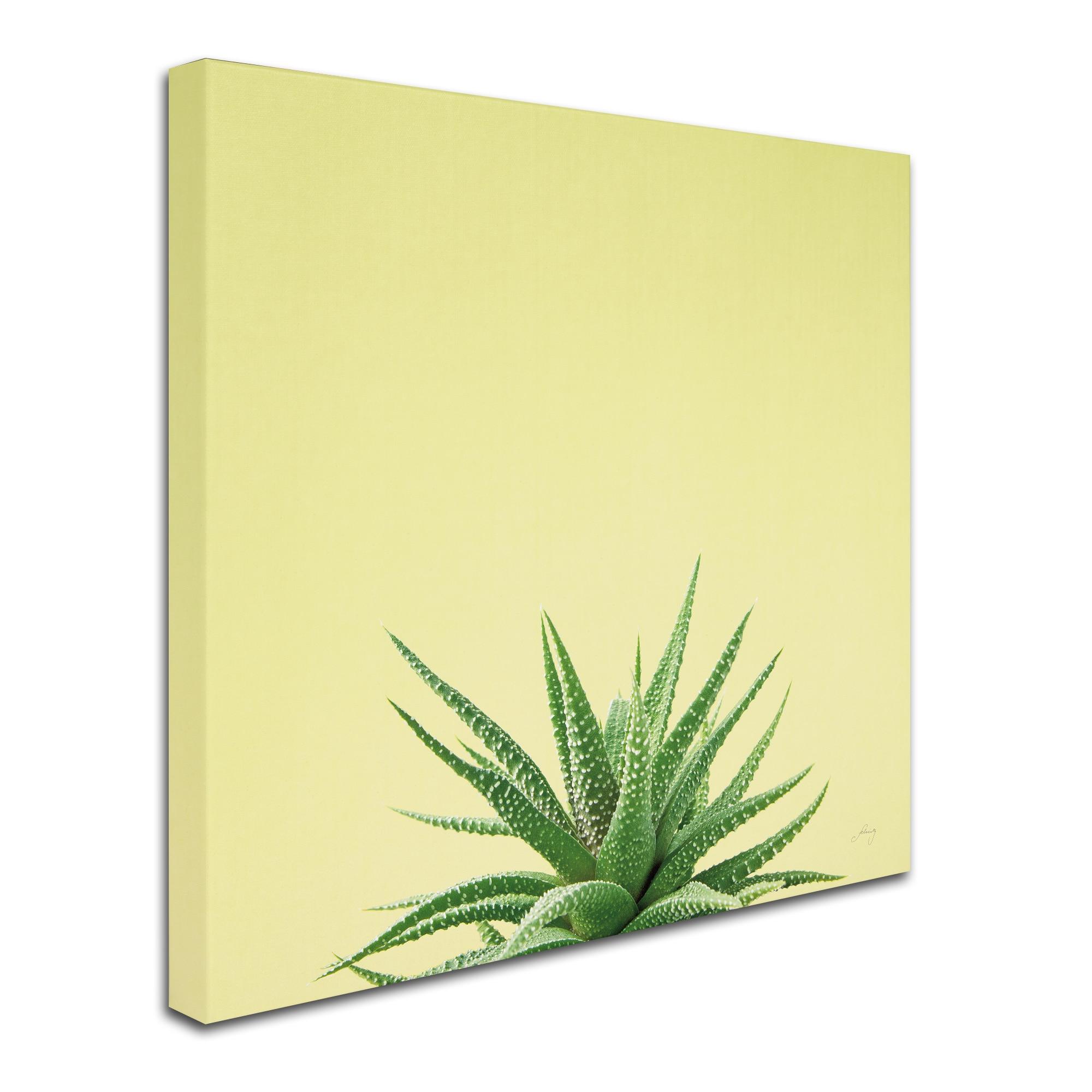 Felicity Bradley \'Succulent Simplicity I\' Canvas Art - Free Shipping ...