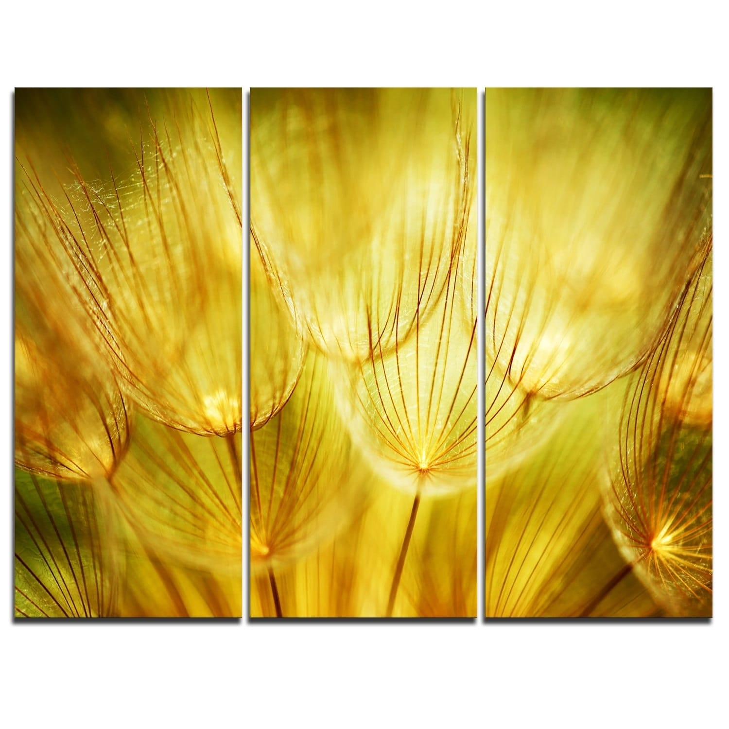 Wonderful Dandelion Vinyl Wall Art Photos - The Wall Art Decorations ...