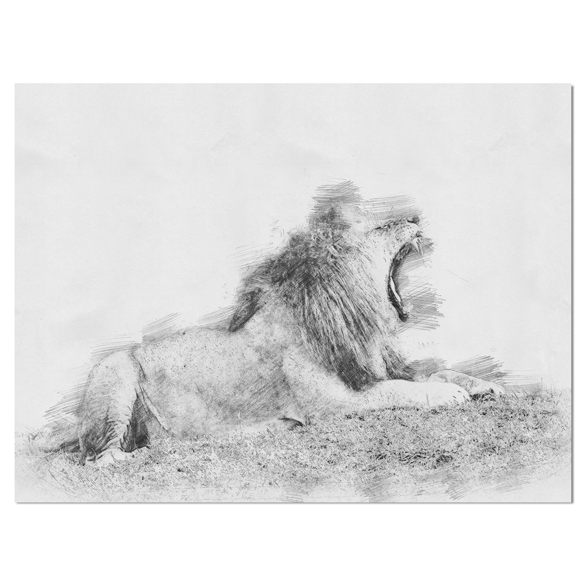 Shop designart black and white lion pencil sketch animals painting print on wrapped canvas on sale free shipping on orders over 45 overstock