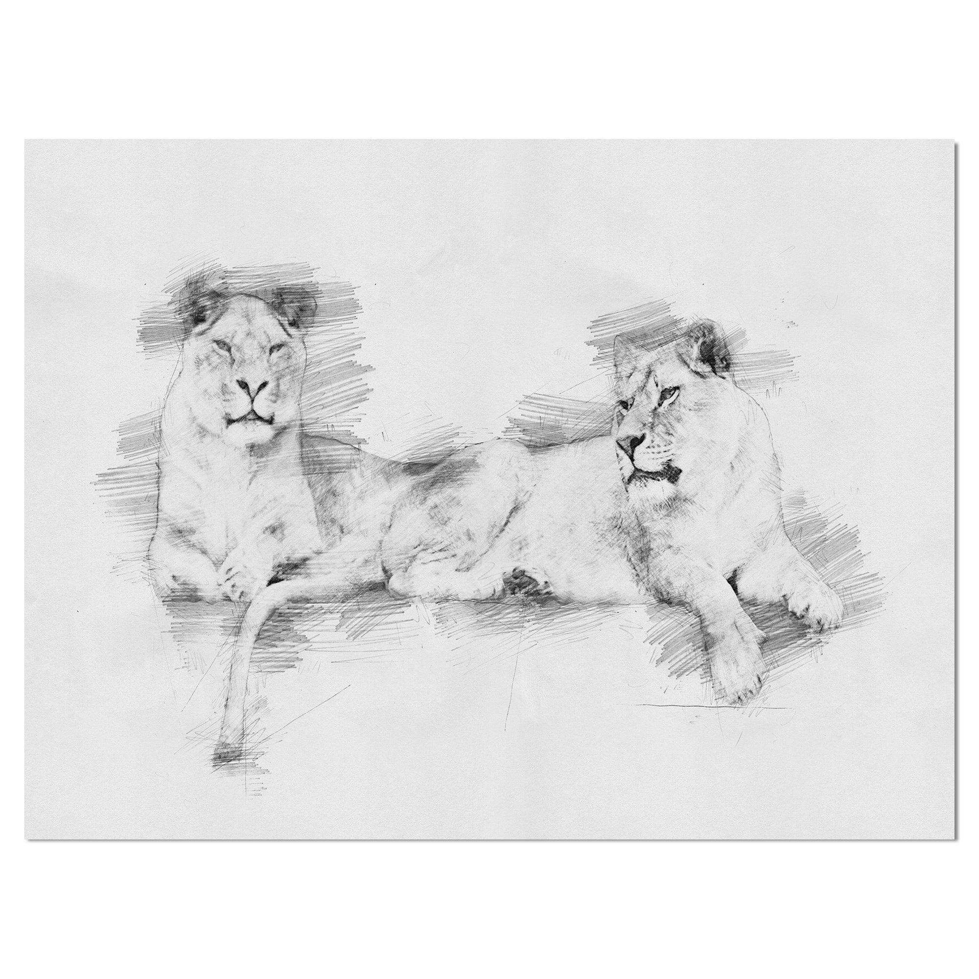 Designart black and white lion pencil in pencil sketch animals painting print on wrapped canvas