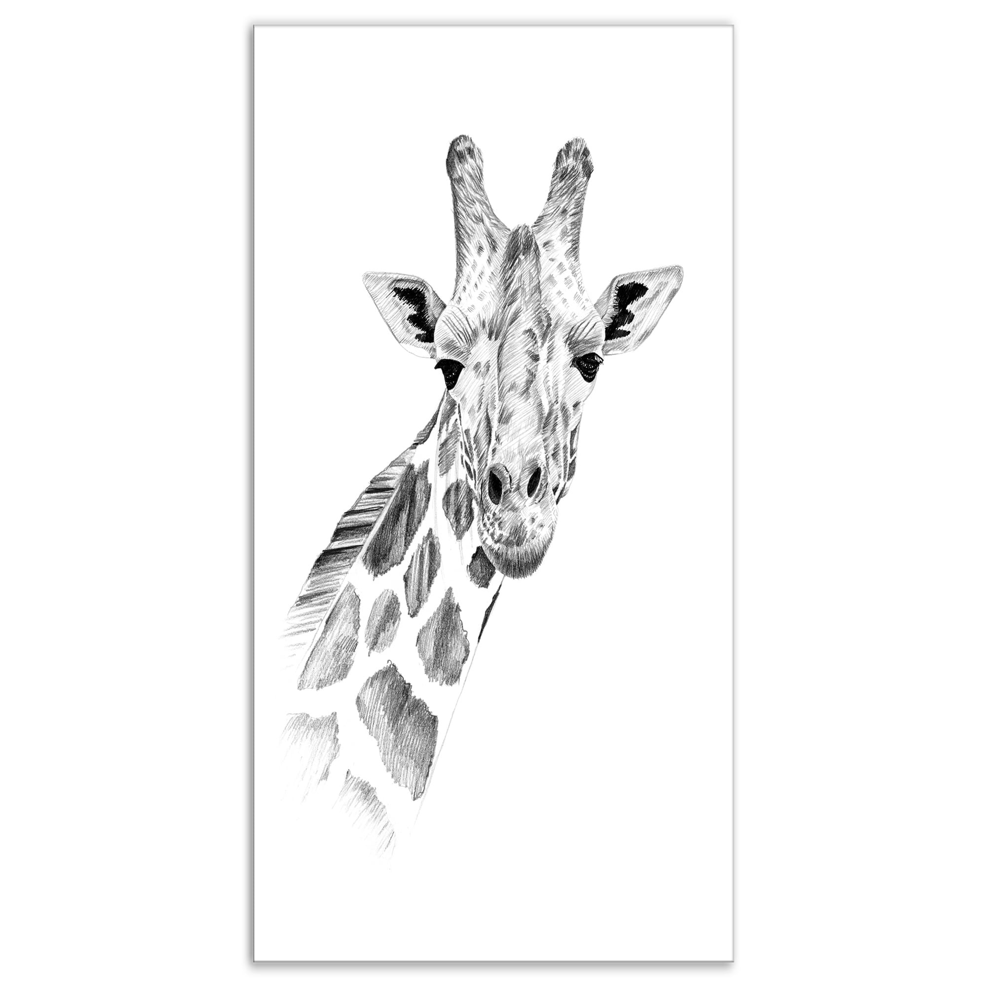 Designart pencil giraffe sketch in black and white animals painting print on wrapped canvas white