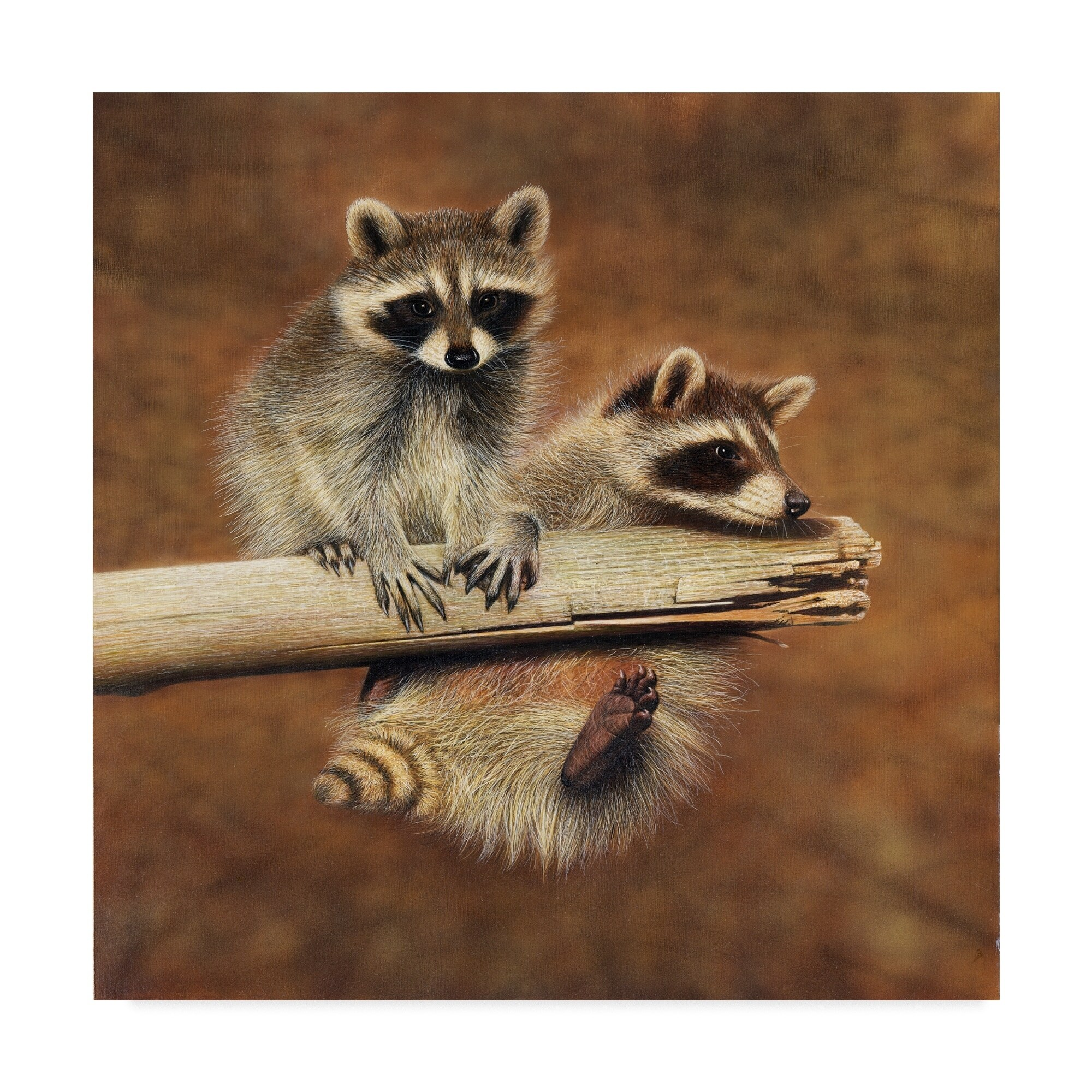 Shop Clarence Stewart \'Raccoons In Tree\' Canvas Art - White - On ...