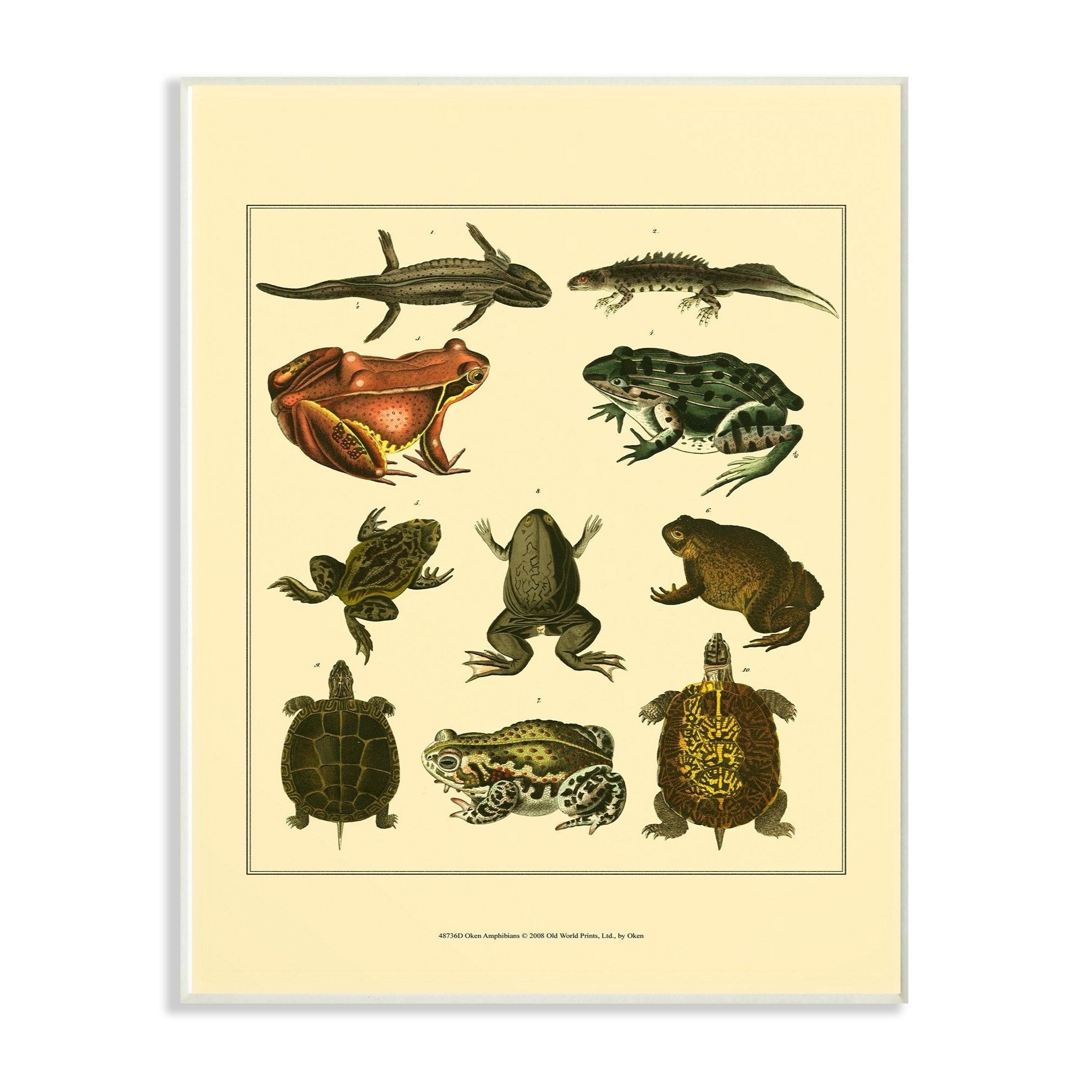 Shop The Stupell Home Decor Collection Frog And Newt And Turtle ...
