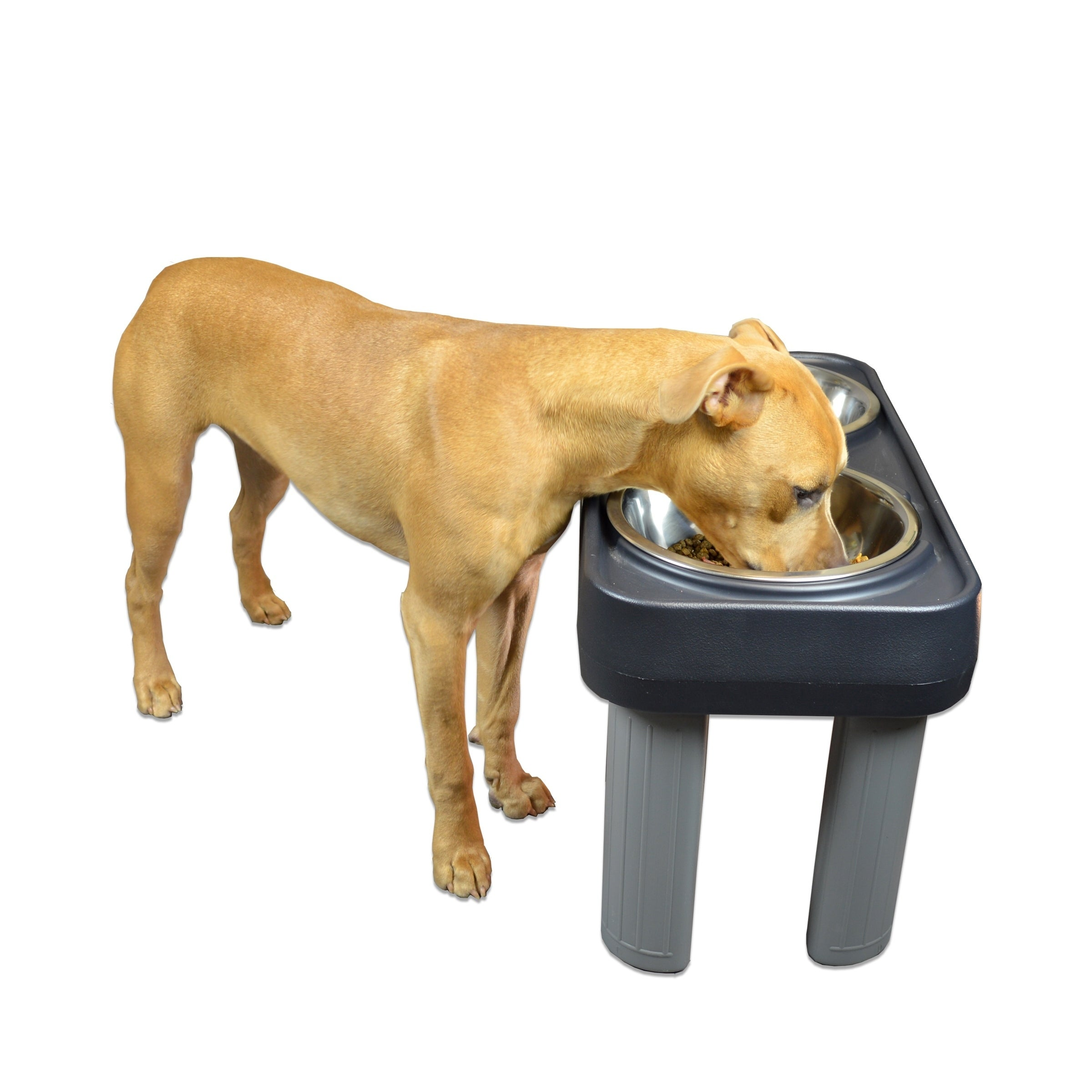 feeder orange slow hound animates fun pet for outward cora coral supplies dogs bowl dog