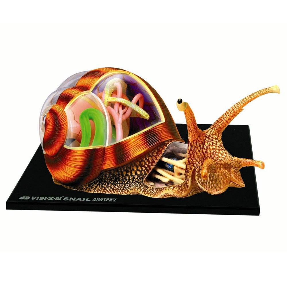 Shop 4D Snail Anatomy Model Kit - Free Shipping On Orders Over $45 ...
