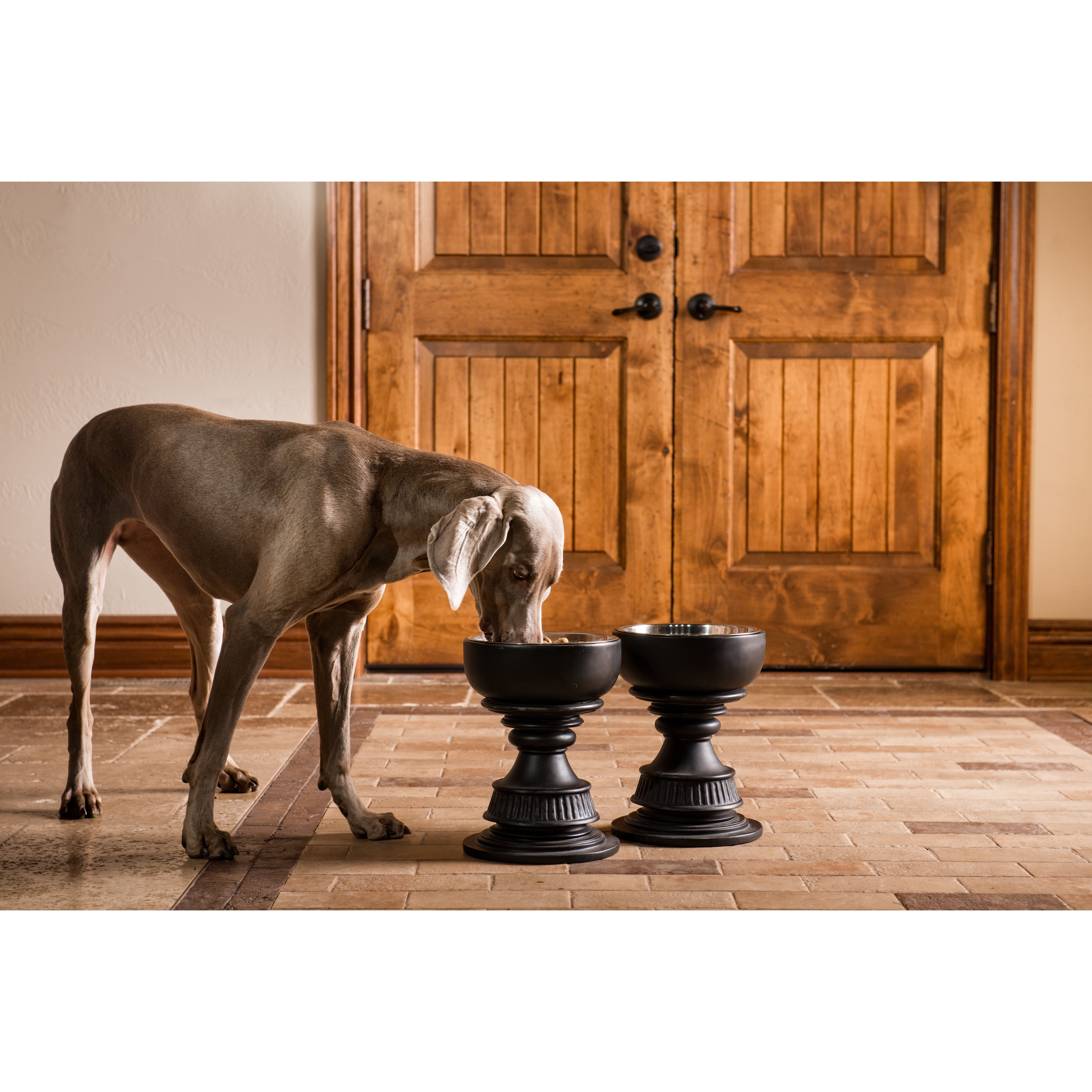 free pet today feeders eco overstock shipping product supplies feeder friendly raised indipets