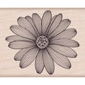 "Hero Arts Mounted Rubber Stamps 4""X1""-Etched Daisy"