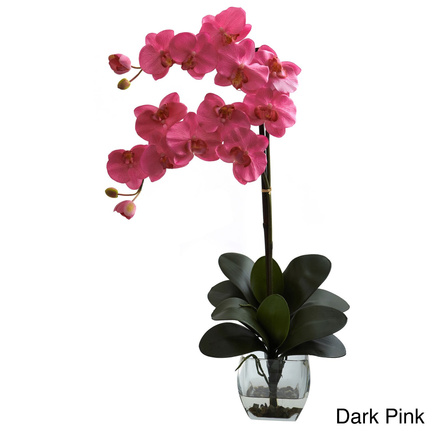 Double phal orchid with vase arrangement free shipping today double phal orchid with vase arrangement free shipping today overstock 15675383 reviewsmspy