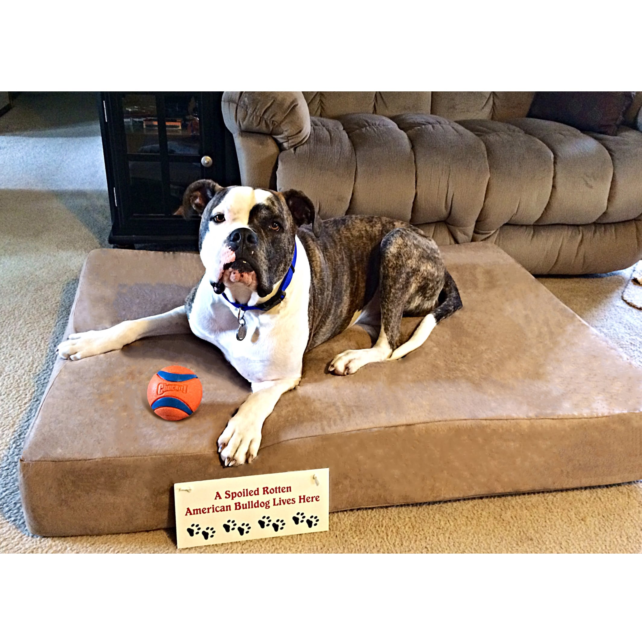 memory shop in bed petcostore gold stages life harmony dog beds petco all en bedding nester center blast for category and foam orthopedic