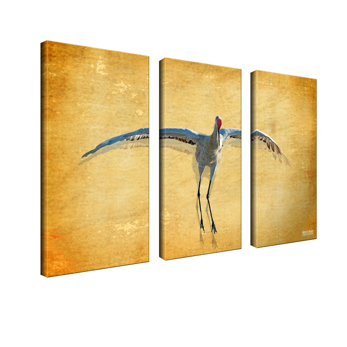 Shop Bruce Bain \'Dancing Bird\' 3-piece Set Canvas Wall Art - On Sale ...