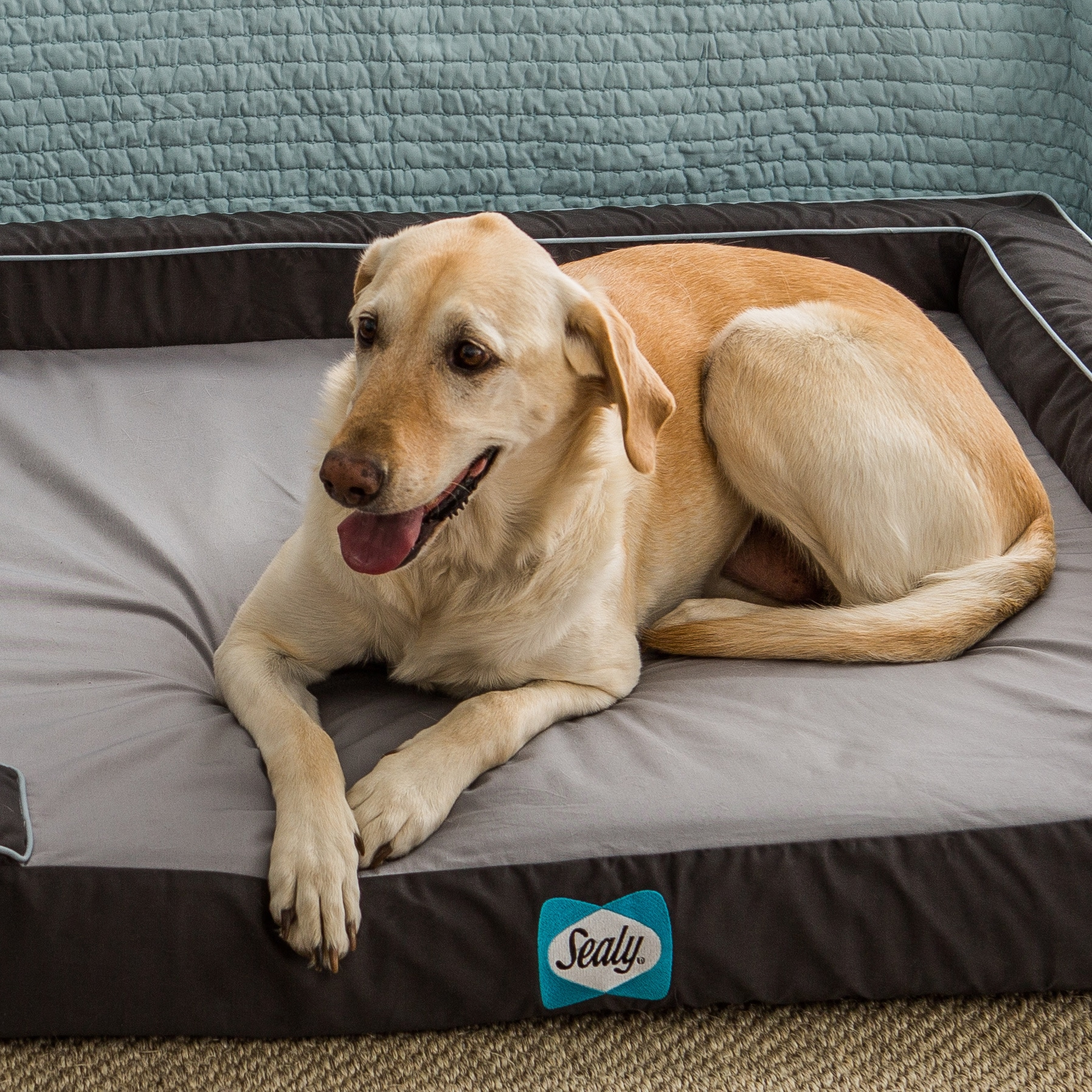 Shop Sealy Lux Extra Large Memory Foam Pet Bed - On Sale - Free ...