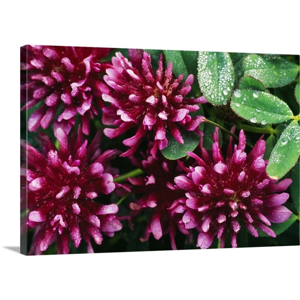 Shop Premium Thick Wrap Canvas Entitled Springbank Clover Flower
