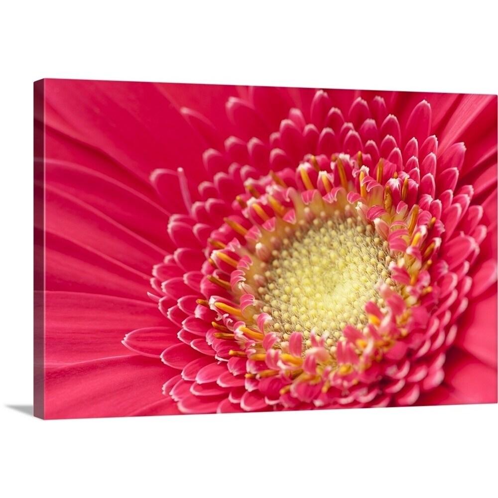 Shop Premium Thick Wrap Canvas Entitled Pink Gerbera Daisy Extreme