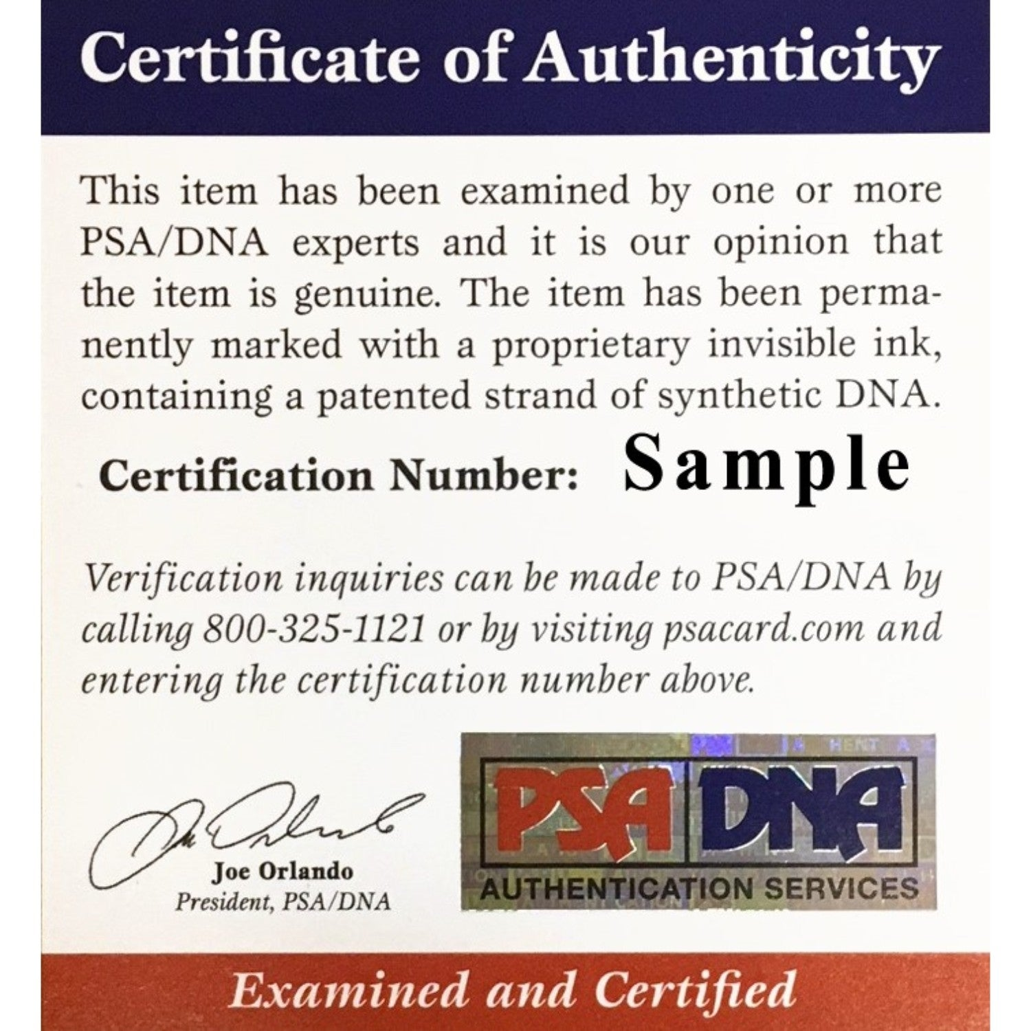 Shop Luka Doncic Dallas Mavericks Autographed NBA Signed Basketball PSA DNA  COA - Free Shipping Today - Overstock.com - 25684171 a47aa0a6e