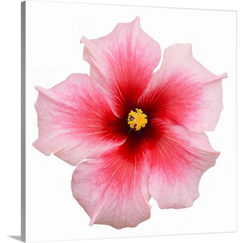 Shop Premium Thick Wrap Canvas Entitled Pink Hibiscus Flower Multi