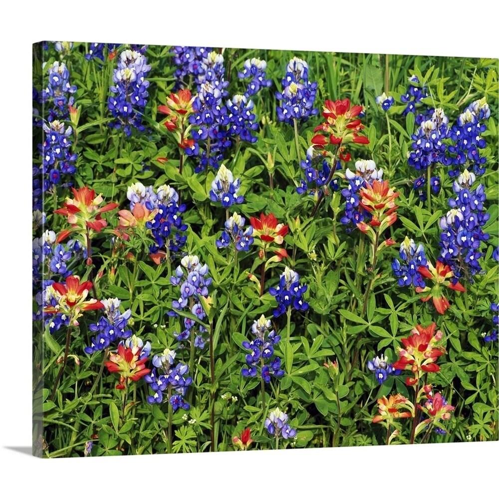Shop Premium Thick Wrap Canvas Entitled Texas Bluebonnets And Indian
