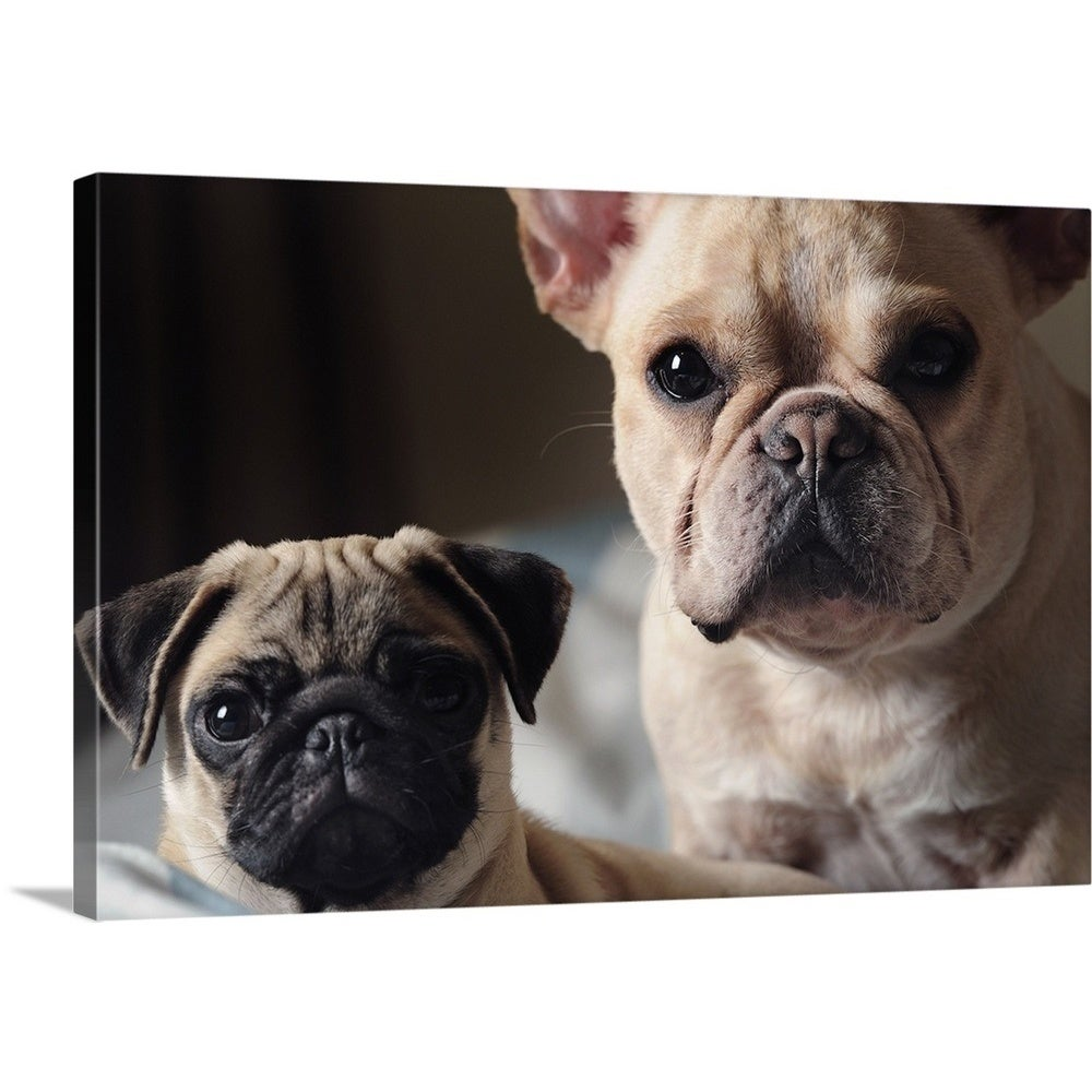 Shop Premium Thick-Wrap Canvas entitled A bulldog and a Pug lying down on  the bed - Multi-color - On Sale - Free Shipping Today - Overstock.com -  21003817