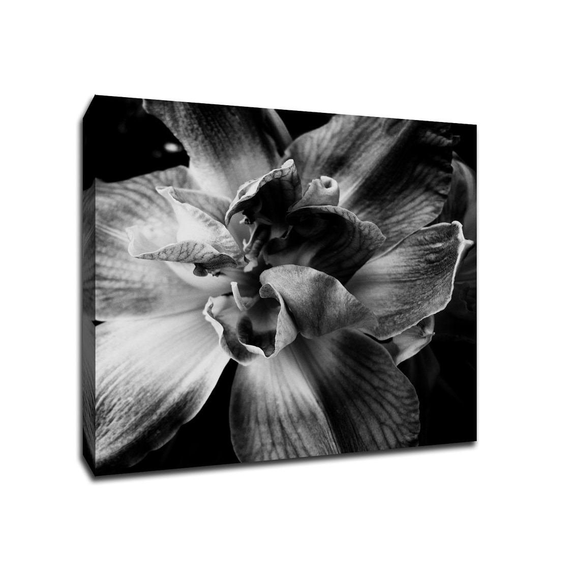 Black And White Flower Flowers 20x20 Gallery Wrapped Canvas Wall