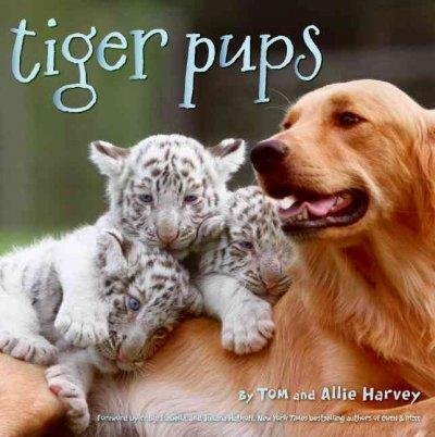Tiger Pups (Hardcover)