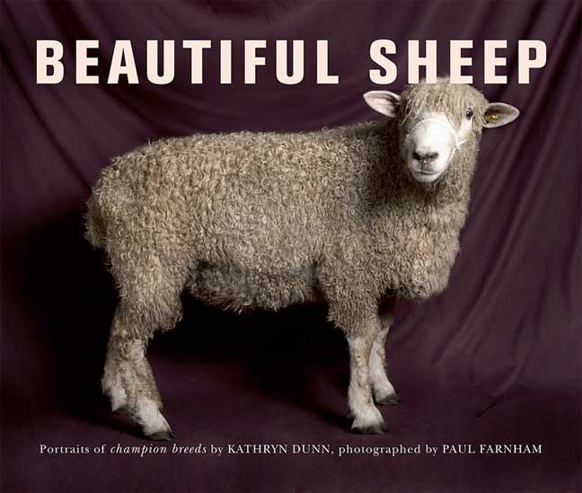 Beautiful Sheep: Portraits of Champion Breeds (Paperback)