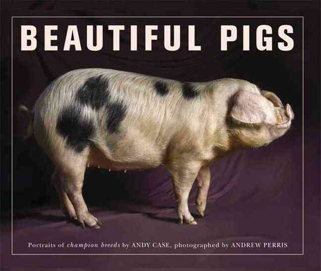 Beautiful Pigs: Potraits of Fine Breeds (Paperback)