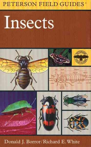 A Field Guide to Insects: America North of Mexico (Paperback)