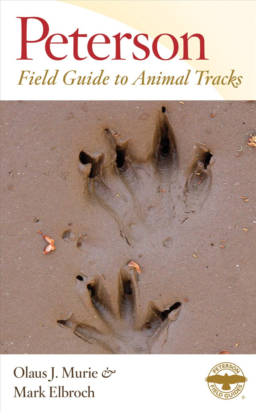 Peterson Field Guide to Animal Tracks (Paperback)