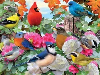 Garden Birds: 500 Pieces (General merchandise)