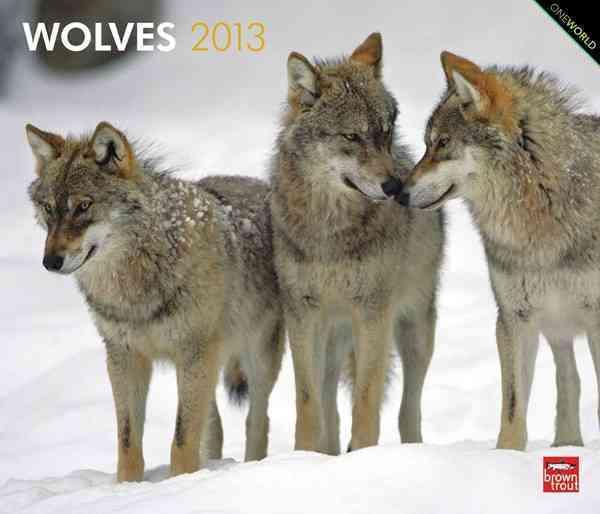 Wolves 2013 Calendar (Calendar)