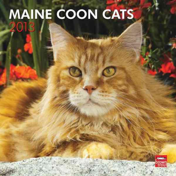 Maine Coon Cats 2013 Calendar (Calendar)