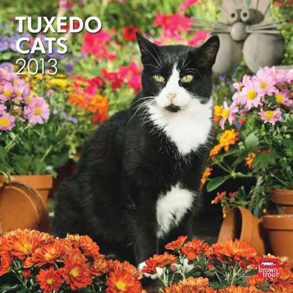 Tuxedo Cats 2013 Calendar (Calendar)