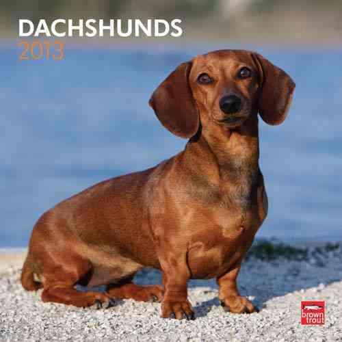 Dachshunds 2013 Calendar (Calendar)