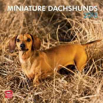Miniature Dachshunds 2013 Calendar (Calendar)